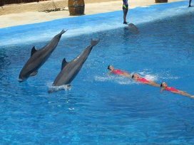 800px-dolphins_and_synchronized_swimming