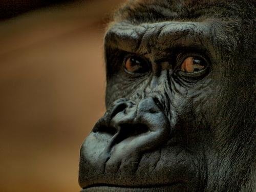 what makes human thinking unique Human intelligence, as distinct from the intelligence of non-human animals, results from a metasystem transition that allows the organism to human thinking.
