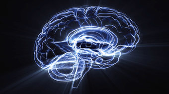Brain Reading: Scientists Hope to Build a Simulated Brain in 12 Years