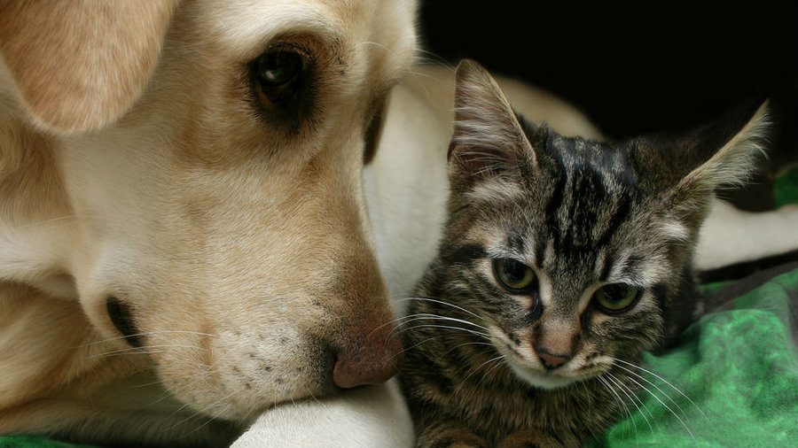 Cat%20and%20dog
