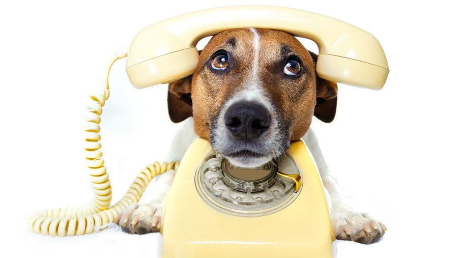 dogs telephone