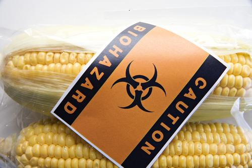 No Ban on GMO Corn in France