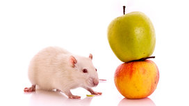 Shutterstock_41292076_mouse_cropped