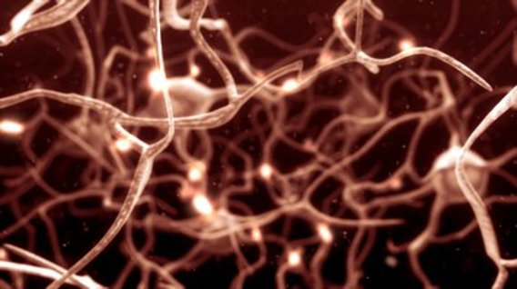Stock-footage-inside-the-brain-concept-of-neurons-and-nervous-system