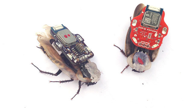 Remote-controlled-cockroach