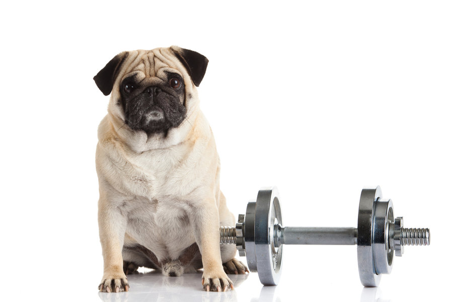 00doggy_gym