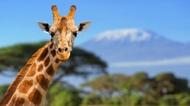 Giraffe_post
