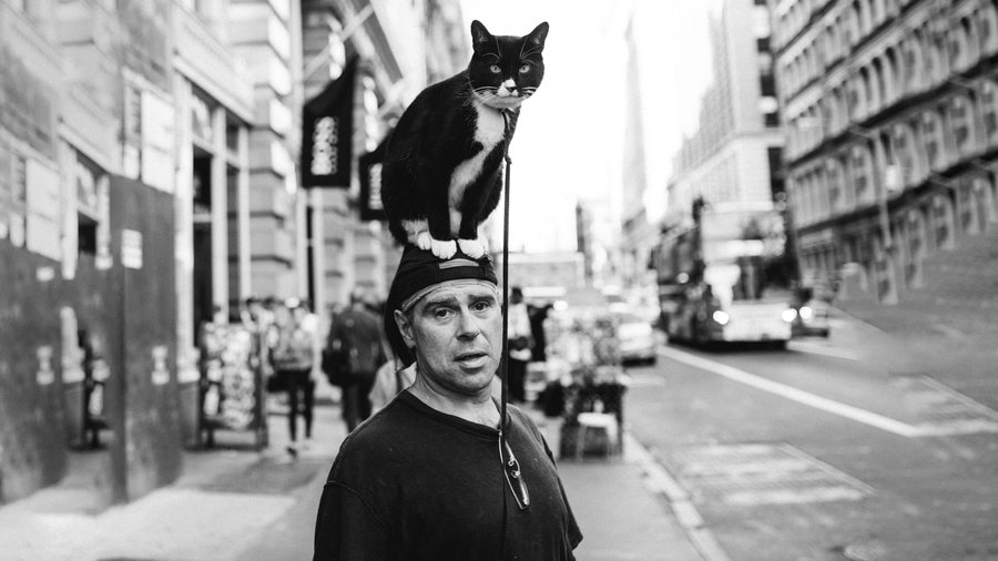Cat_on_mans_head_copy
