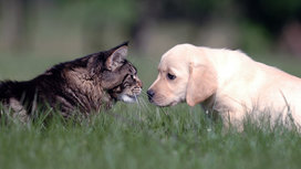 Dog_and_cat_love