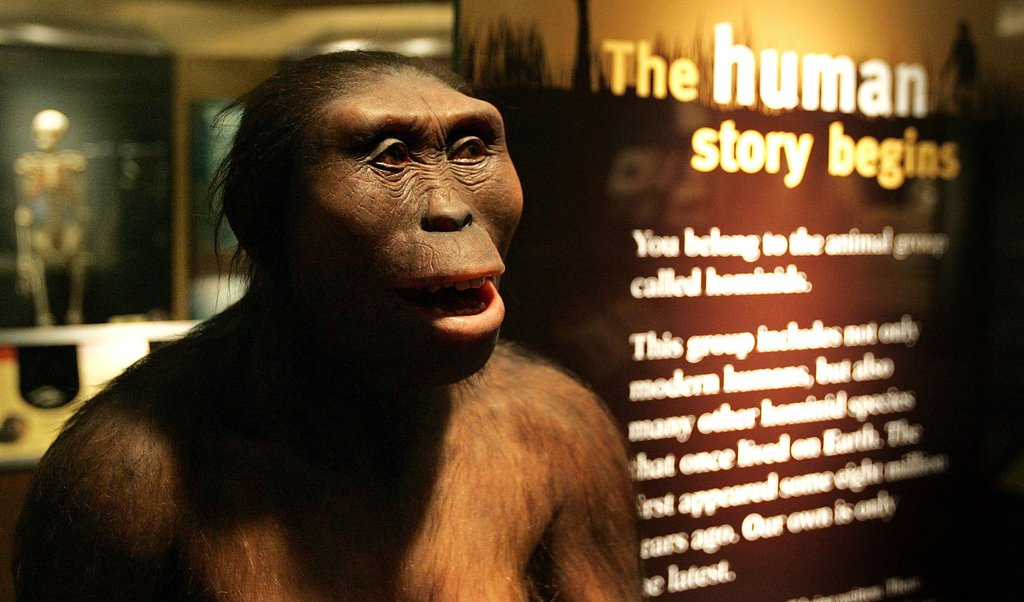 What role does sex play in evolution
