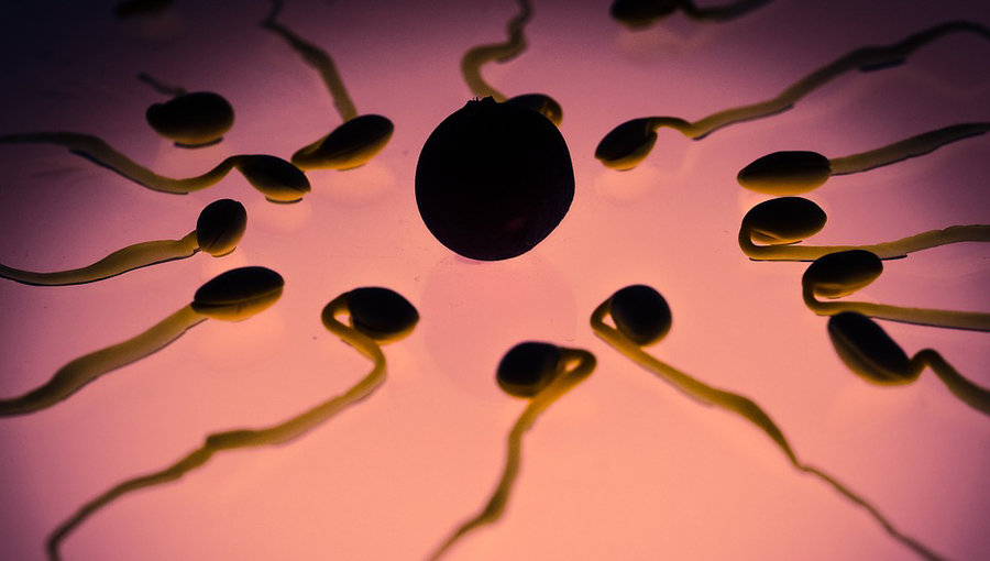 Dick virus culture sperm