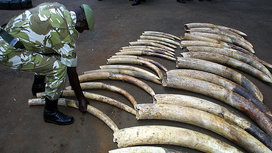 African_elephant_poaching-16x9