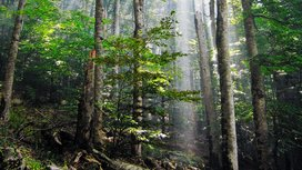 Forest_cropped