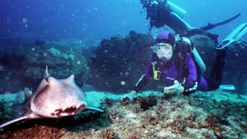 Silvia_earl_and_shark_cropped