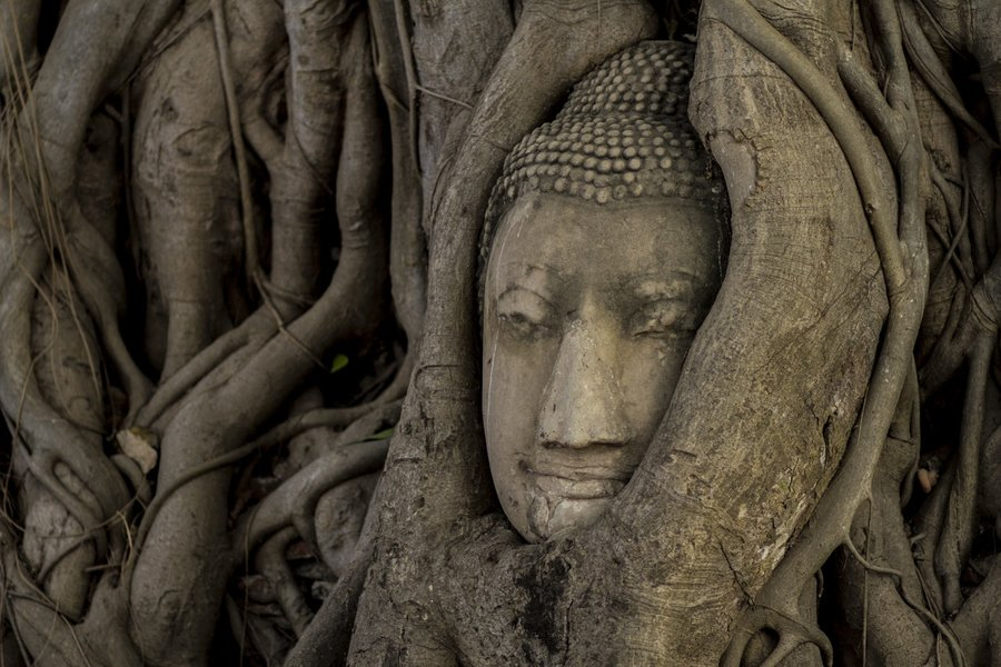 This Buddhist Parable Can Ease Your Suffering During a Crisis