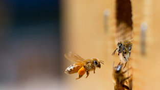 Research Reveals That Honeybees Comprehend the Number 0