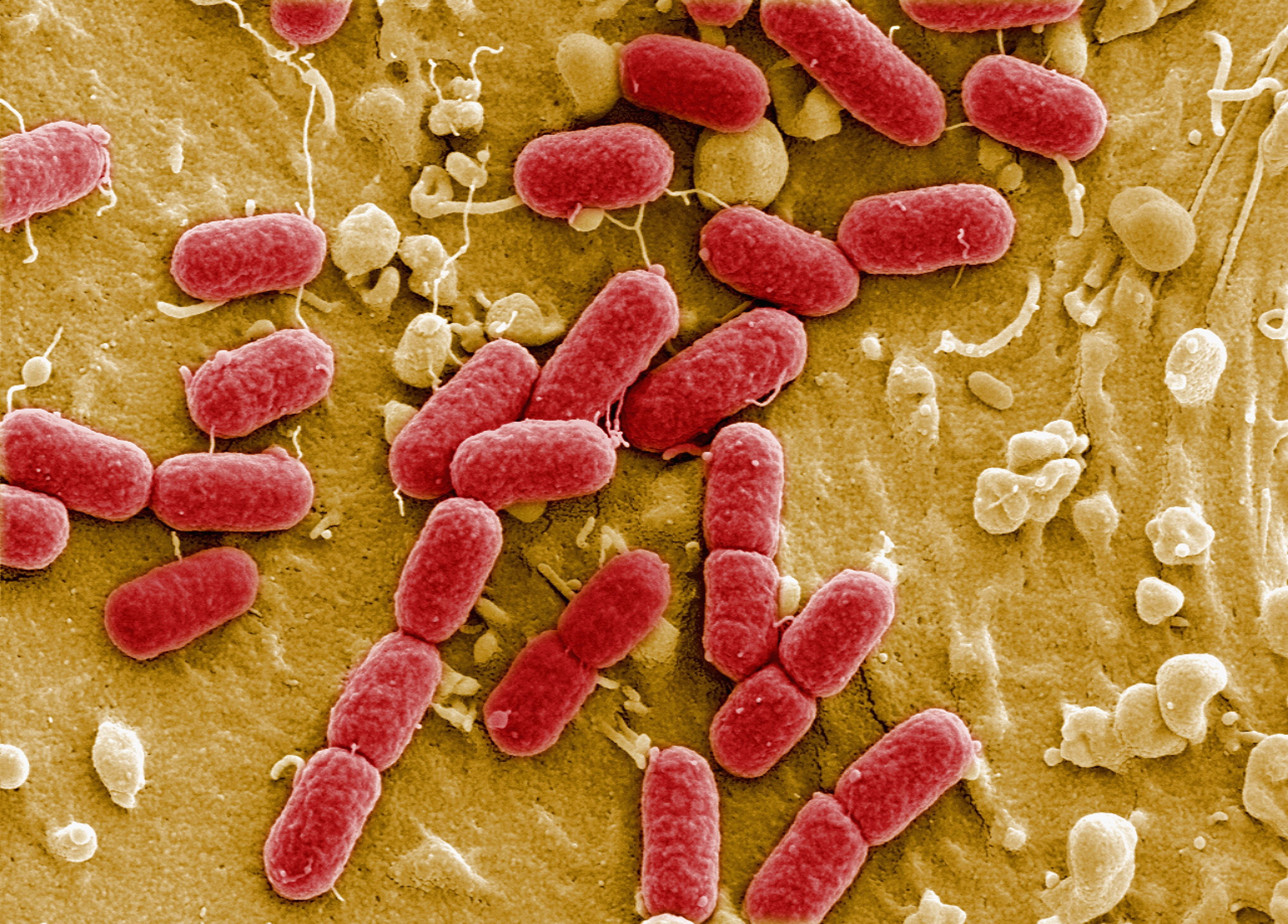 Any cool microorganisms out there to write about?